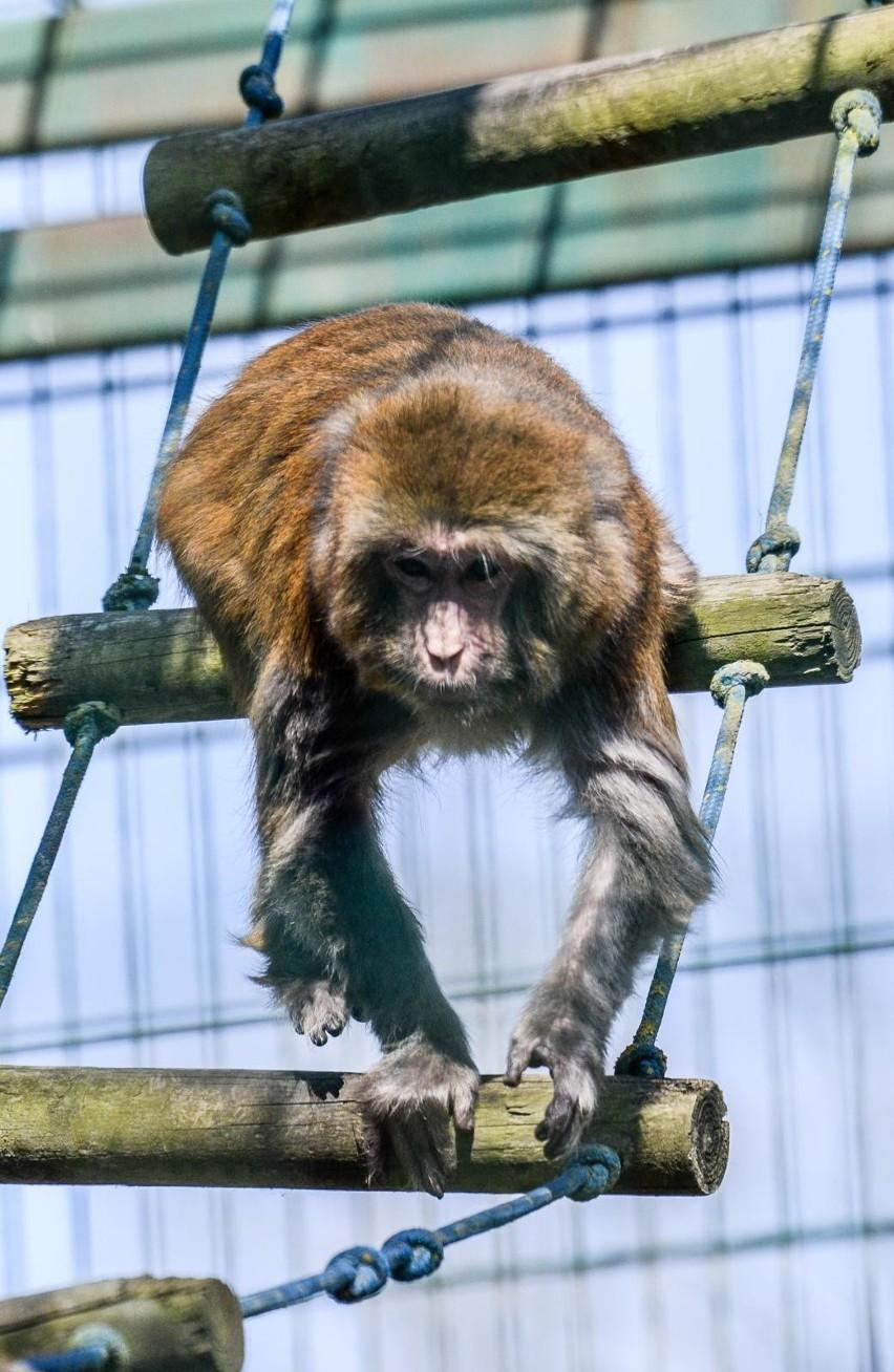 Gdańskie zoo budzi się na wiosnę!