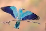 Te ptaki już niemal wyginęły w Polsce. To ostatnia chwila, by je zobaczyć (ZDJĘCIA)