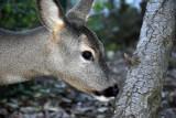 Jelenie, sarny, dziki - baza w Redzikowie dostała zielone światło na pozbycie się zwierząt ze swojego terenu