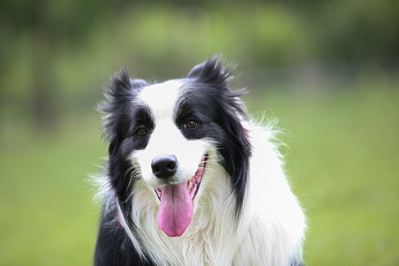 najlepszy pies dla dziecka  psy tych ras nadaj u0105 si u0119 idealnie