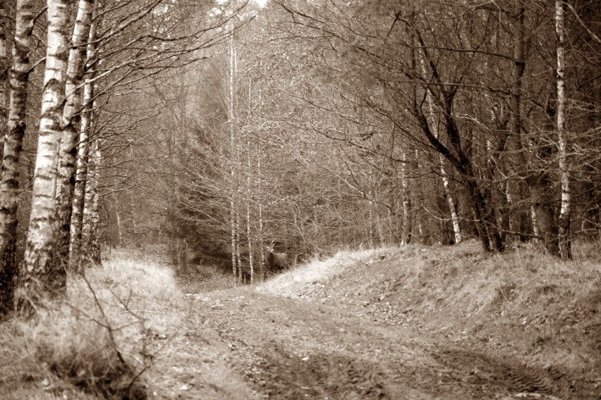 Warto spacerować w lasach na terenie gminy Miastko. Dzisiaj...