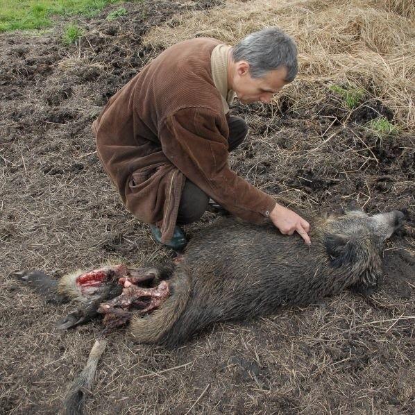 - Zwierzęta z parku, zwabione na jedzenie, są potem legalnie zabijane. To niepojęte - ocenia Zenon Kruczyński były myśliwy, obecnie ekolog z Pracowni na Rzecz Wszystkich Istot.