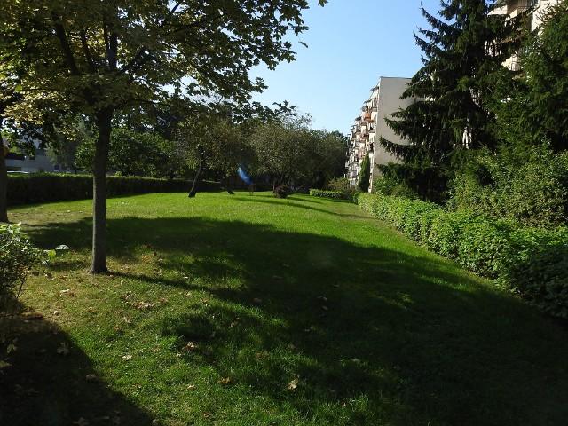 Tak wygląda zieleń wzdłuż ul. Towarowej i Mieszka I.