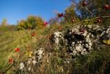 Gdzie na weekend w listopadzie? Niezwykle barwna jesień na Jurze Krakowsko-Częstochowskiej zachęca do spacerów [ZDJĘCIA]