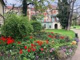 Wybierz się na spacer do parku przy Muzeum-Zamku w Łańcucie. Przepięknie kwitną magnolie, tulipany, hiacynty, bratki [ZDJĘCIA]