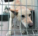 Coraz więcej psów z opolskich schronisk znajduje nowy dom