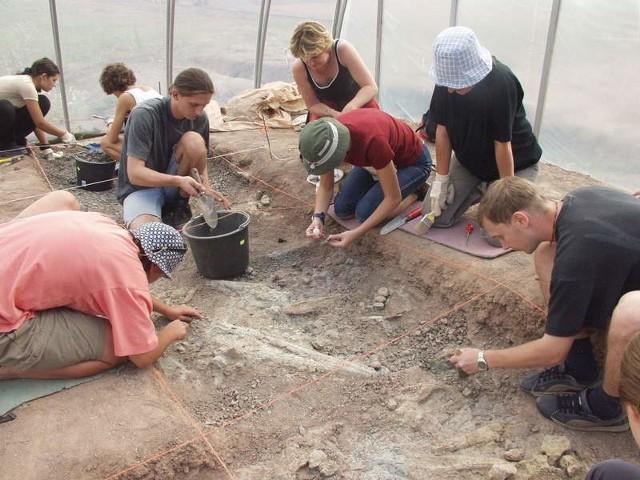 Uczestnicy obozu mają tak zabezpieczyć szczątki dinozaurów, by przetrwały zimę bez uszczerbku.