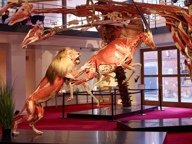 Podczas obchodów 10. rocznicy funkcjonowania gubeńskiego Plastinarium zaprezentowano premierową instalację - lwa polującego na antylopę