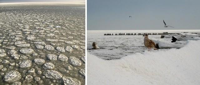Na Bałtyku pojawiła się lodowa kra.