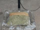 Pies wywąchał marihuanę wartą ponad 180 tys. zł