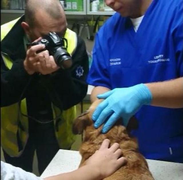 Piła: 36-latek znęcał się nad psem. Wydłubał mu oczy, rzucał nim o ścianę