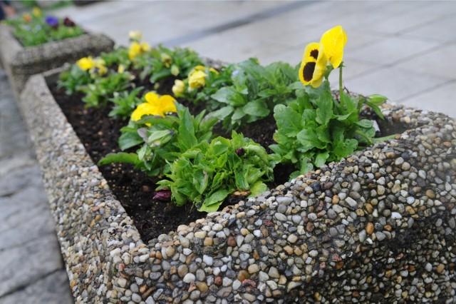 Niektóre rośliny mogą być niebezpieczne dla naszego zdrowia lub nawet trujące. Zobacz, jakie są najczęściej spotykane trujące rośliny doniczkowe w dalszej części galerii >>>