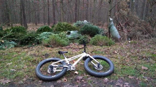 W lesie przy ul. Dąbrowy ktoś porzucił kilkaset choinek.