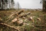 O kontrowersjach wokół ustawy dotyczącej wycinki drzew