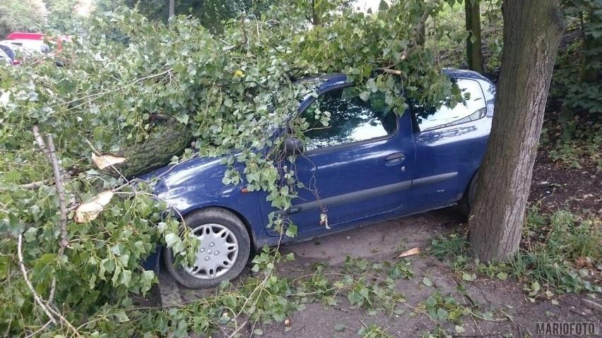 Potężny konar runął na renault clio zaparkowane przy ul. Ozimskiej w Opolu.