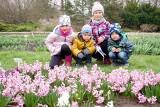 Otwarcie sezonu w Ogrodzie Botanicznym UMCS w Lublinie. Lada dzień zakwitną magnolie. Zobacz zdjęcia
