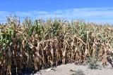 Kwiecień będzie bez opadów. Czy czeka nas susza w tym roku?