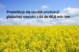 Produkcja oleistych. Prognozowany spadek, największy od czterech lat