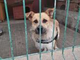 Do gorzowskiego schroniska trafiły psy z znanego z okropnych warunków schroniska w Radysach. Teraz czekają na nowy dom