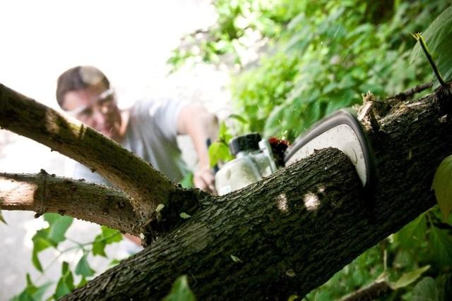 Prace w ogrodziePrace pielęgnacyjne do wykonania w ogrodzie jesienią