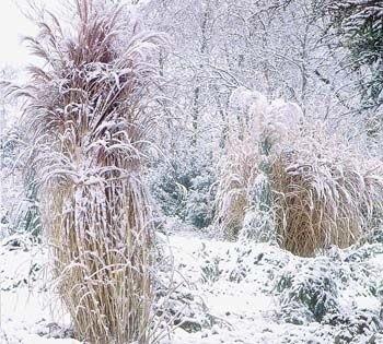 W zimie ogród jest piękny