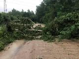 Burza w powiecie grójeckim. Zalana droga, przewrócone drzewa i grad. Mogą być duże straty w sadach