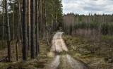 Bardzo sucho w lasach regionu. To grozi pożarem