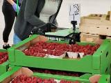Białystok. Niedziela handlowa na giełdzie. Ile kosztują warzywa, kwiaty i owoce na targu przy Andersa? Sprawdź ceny!