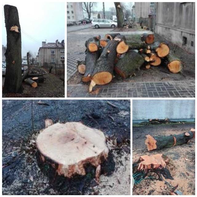 Urząd Gminy w Turawie przekonuje, że drzewa były chore i stwarzały zagrożenie dla ludzi. W ich miejscu posadzone zostaną nowe.