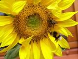 Międzynarodowy Rok Zdrowia Roślin. Szkodniki i choroby niszczą co roku 40% plonów na świecie