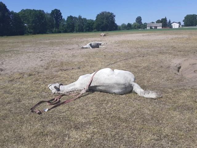 Konie padły na pastwisku, do tragedii doszło w środę 9 czerwca