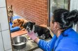 Schroniska dla zwierząt w Bydgoszczy w czasie epidemii - jak sobie radzą?