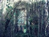 Zapomniane lubuskie cmentarze. Pamiętają o nich tylko nieliczni. Zobaczcie zdjęcia i wideo