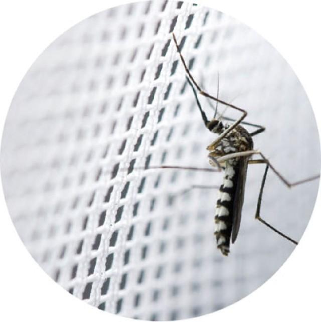 Moskitiera okienna - znajdź sposób na relaks w swoim domuMoskitiera okienna - relaks w domu bez insektów
