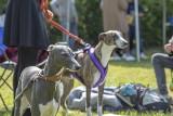 Najpiękniejsze psy w Rybniku na II Międzynarodowej Wystawie Psów Rasowych. Zobaczcie zdjęcia
