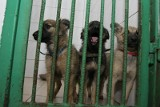 Areszt Śledczy w Hajnówce. Więźniowie opiekują się psami ze schroniska