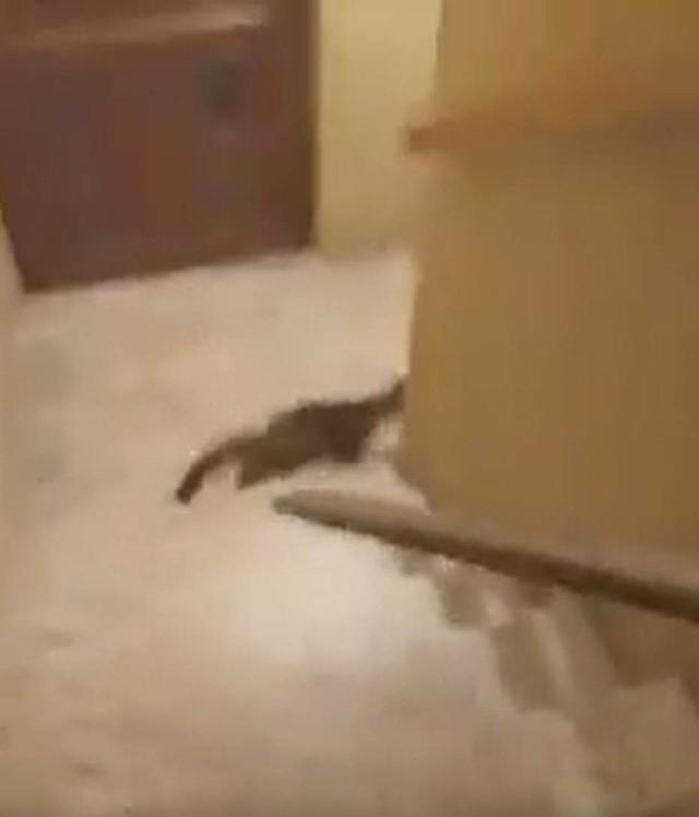 Mieszkaniec Prabut skatował kota pałką. Jest wyrok sądu w tej sprawie