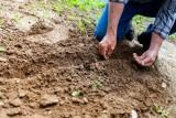 Dopłaty do wapnowania gleb. Od kiedy wnioski, gdzie i kto może je złożyć? Zasady, stawki