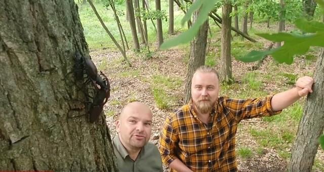 Niesamowity film pokazujący walkę Jelonków Rogaczy nakręcony w Nadleśnictwie Włoszakowice. Takie sceny rzadko można oglądać