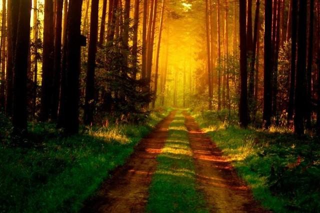 Za najlepsze zdjęcie odpowiedzialnie zarządzanego lasu 2011 roku, jury oceniające prace uznało fotografię wykonaną przez Karolinę Komosę.