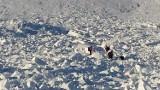 Ogromna lawina w Karkonoszach. Ratownicy szukali trzech osób (ZDJĘCIA)