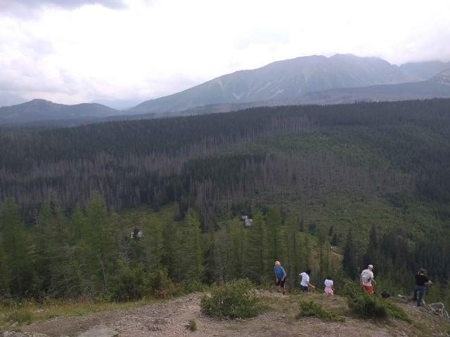 Suche lasy widziane z Wielkiego Kopieńca