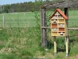 """Leśnicy z Gołąbek założyli łąkę kwietną. """"Biuro blisko, będziemy nasłuchiwać znajomego brzęczenia"""". 20 maja mamy Światowy Dzień Pszczół"""