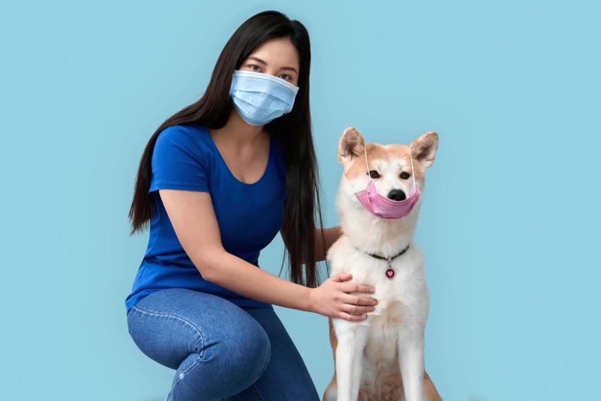 Opieka nad zwierzętami w czasie zagrożenia koronawirusem. Co zrobić z psem lub kotem? Zaplanuj to!