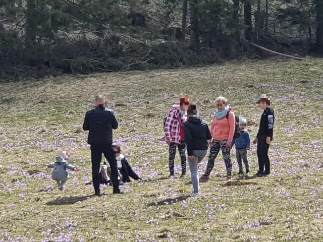 Rodzina w krokusach w Dolinie Kościeliskiej