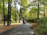 Dokąd wybrać się na jesienny spacer? Oto parki w Poznaniu, do których zawitała jesień