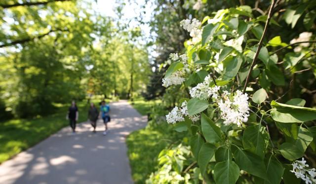 Zielone Expo odbędzie się w Łodzi?