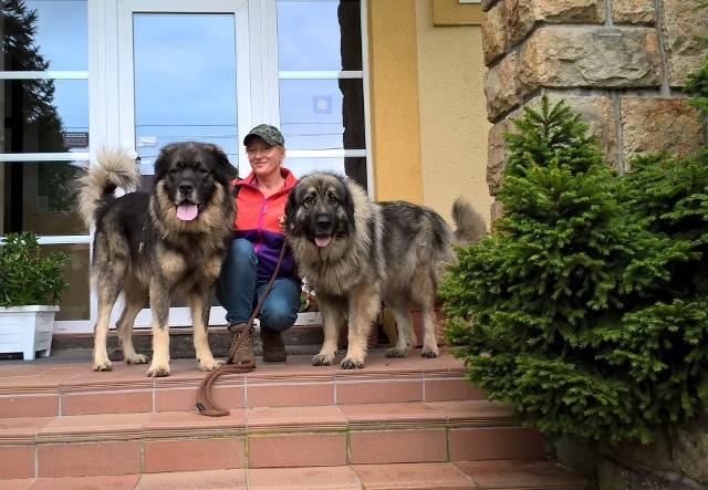 Jolanta Kapuścińska ze swoimi ukochanymi psami. To jugosłowiańskie psy pasterskie