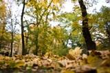 Jesienna wycieczka w Wielkopolsce. 10 miejsc na spacer jesienią, niedaleko Poznania