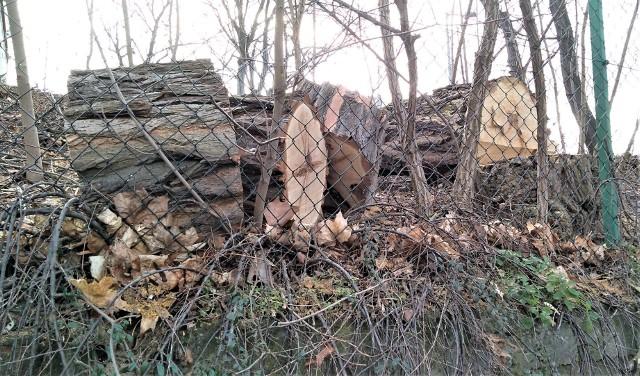 1 marca 2020 r. Wycięte drzewa przy ul. Lipowej w Zielonej Górze